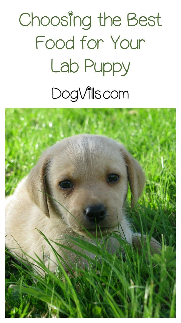 Choosing The Best Quality Dog Food