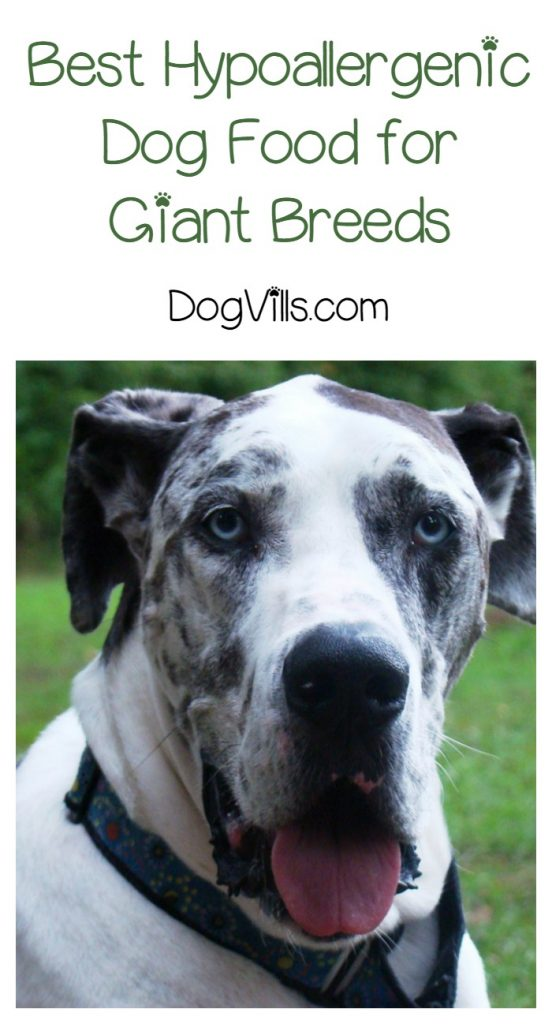 Best Hypoallergenic Dog Food For Giant Breed Dogs Dogvills