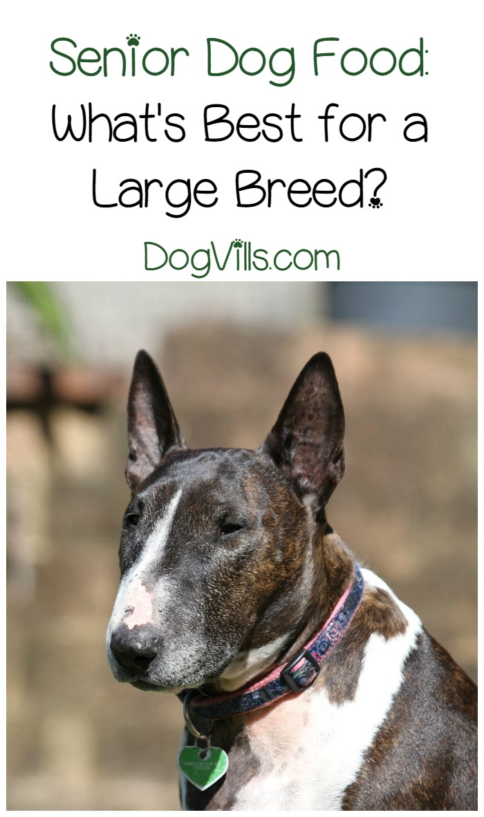 Best Brand Of Dog Food For Large Breeds