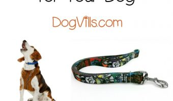 Walk your dog in style with these 5 fabulous Star Wars dog leashes and harnesses! They're a must for any fan of the franchise!