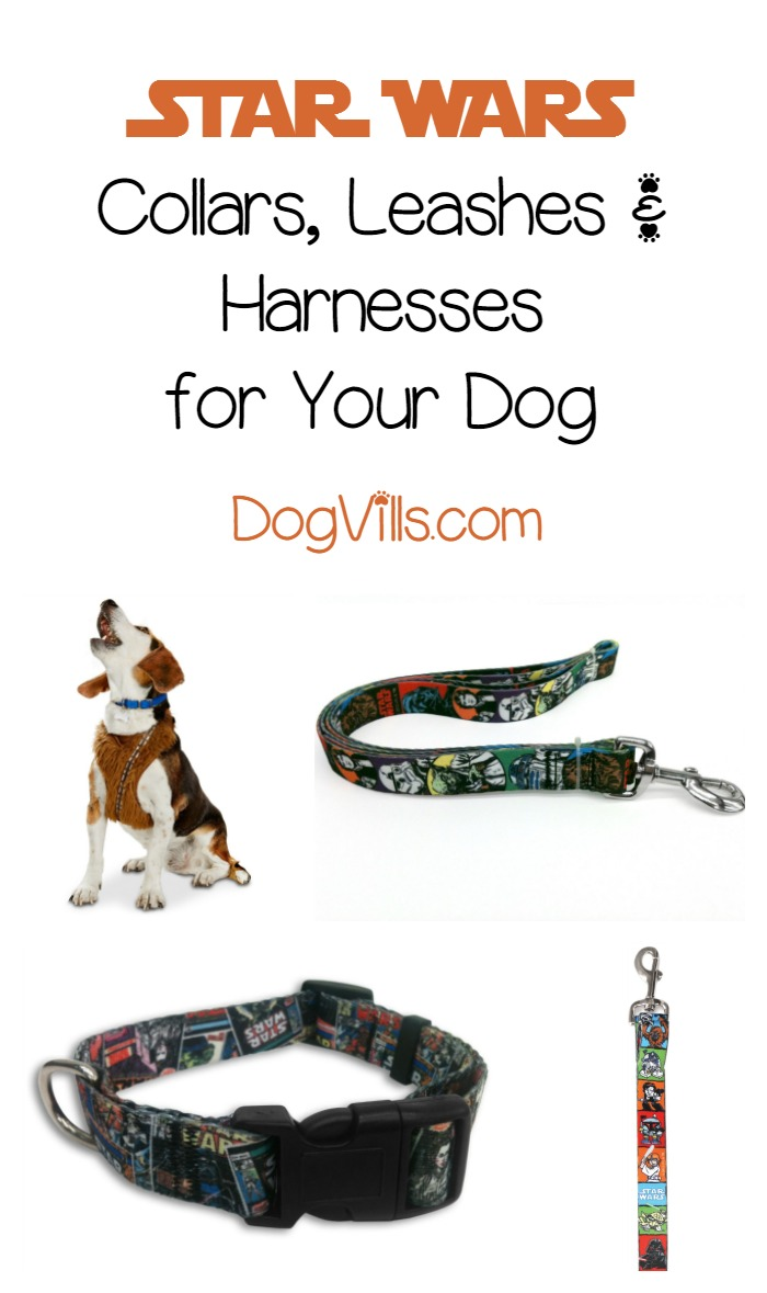 The 5 Star Wars Collars, Harnesses and Leashes You Need