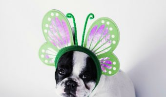 Get ready to go into cute overload, we've got a list of puppy Halloween costumes that are simply adorable! These dogs know how to do costumes!