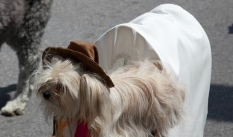 Looking for the best dog costume ever? These dogs can't wait to show off their hilarious and epic looks for Halloween or just for fun!
