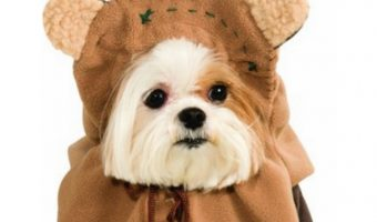 Fuzzy hair don't care; these pups have the right idea with these Ewok dog costumes. Get some Star Wars costume inspiration for your pup from our list!