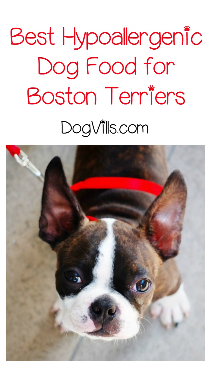 Best Food for Boston Terrier Puppy Dogs - The Happy Puppy Site