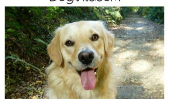 Best Hypoallergenic Dog Food for Goldens