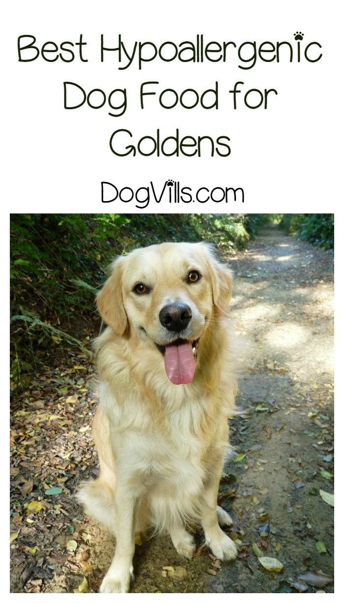 Best Hypoallergenic Dog Food For Goldens Dogvills