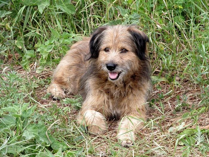Dog Breeds Named After Food