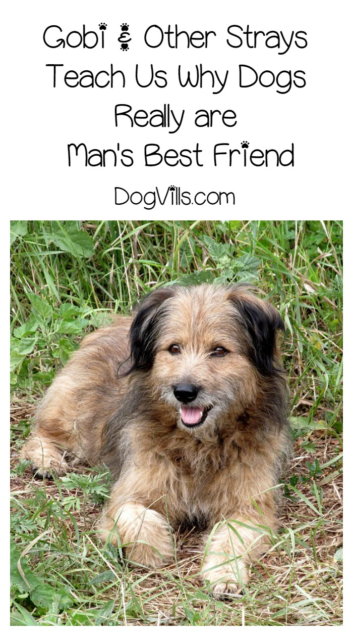 Gobi & Other Strays Teach Us Why Dogs are Man's Best Friend