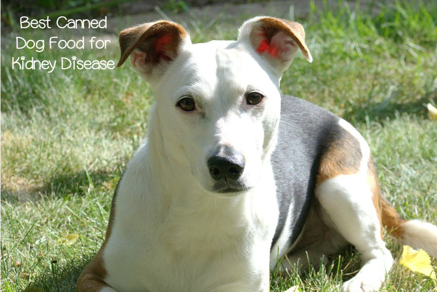 Best Dog Food For Renal Failure