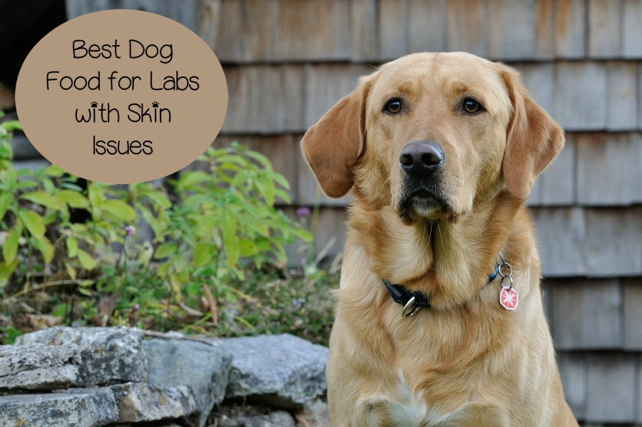 Best Dog Food For Labs With Allergies