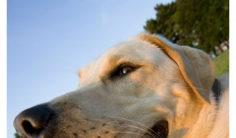 Shedding Lab – The Best Food to Support a Healthy Coat