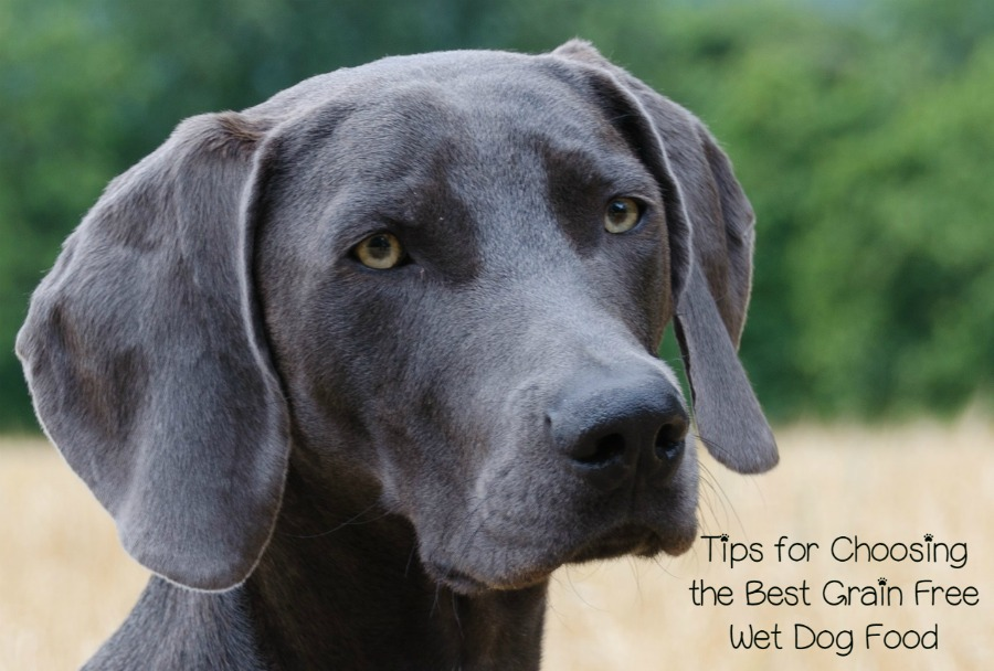 Is Grain Free Dog Food Good For All Dogs