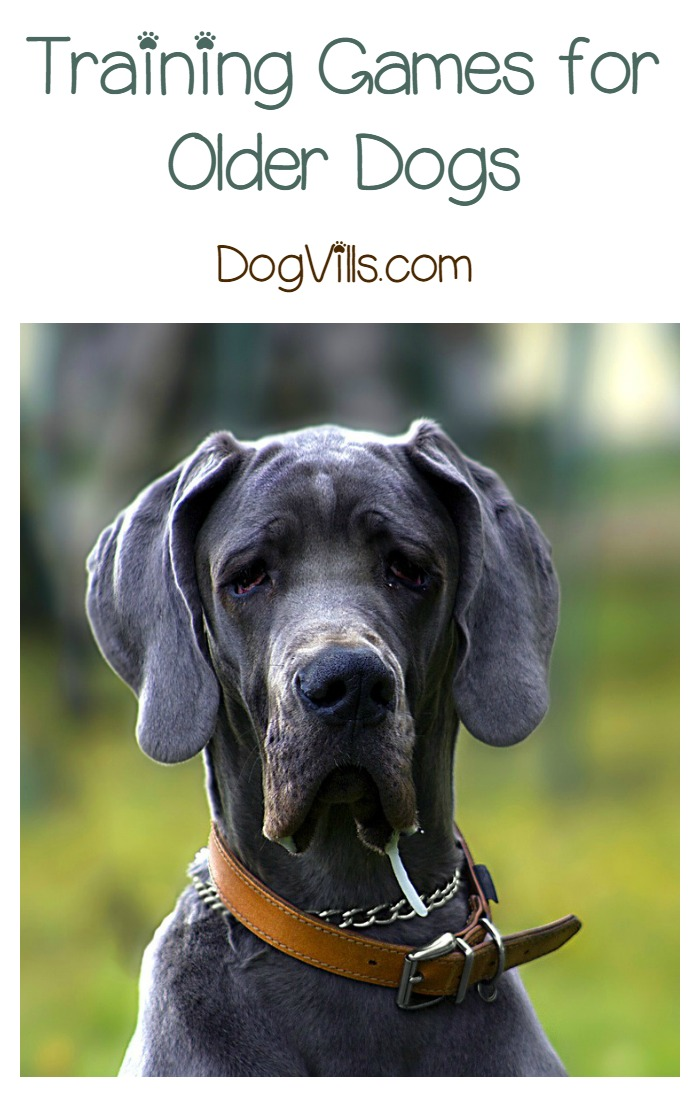 Fun Ways to Use Treats in Training Games for an Older Dog