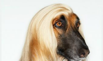 With these tips for grooming the ungroomable dog, your pooch will be looking fab in no time!