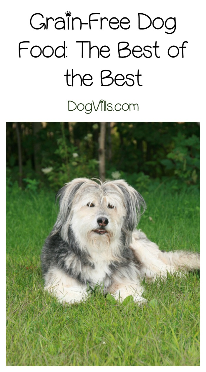 Grain Free Dog Food – The Best of the Best