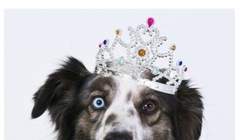 Need a dose of funny dog humor? Check out the goofiest things we say & do to our dogs!