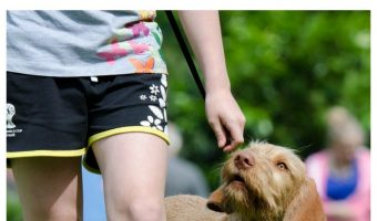 Top 8 Hand Signals To Teach Your Dog (including Deaf Ones)