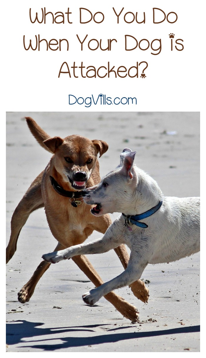 Dog Attack – What to do if it Happens to Your Dog