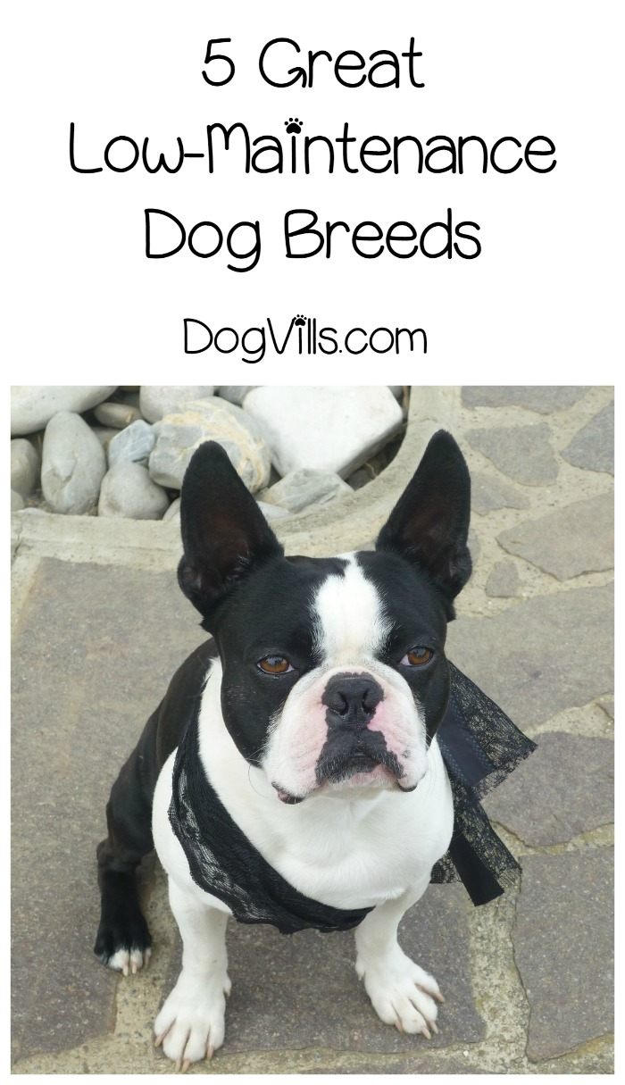 5 Low Maintenance Dog Breeds for Busy Families