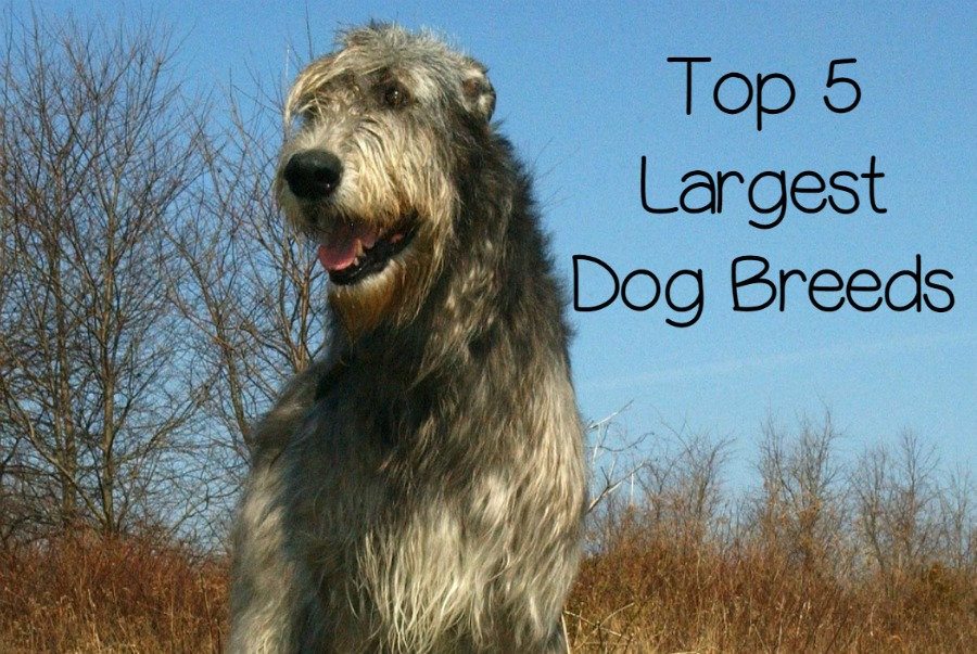 Top Big Dog Toys