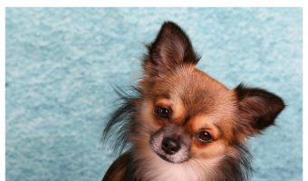 What to Feed a Dog with Chronic Pancreatitis