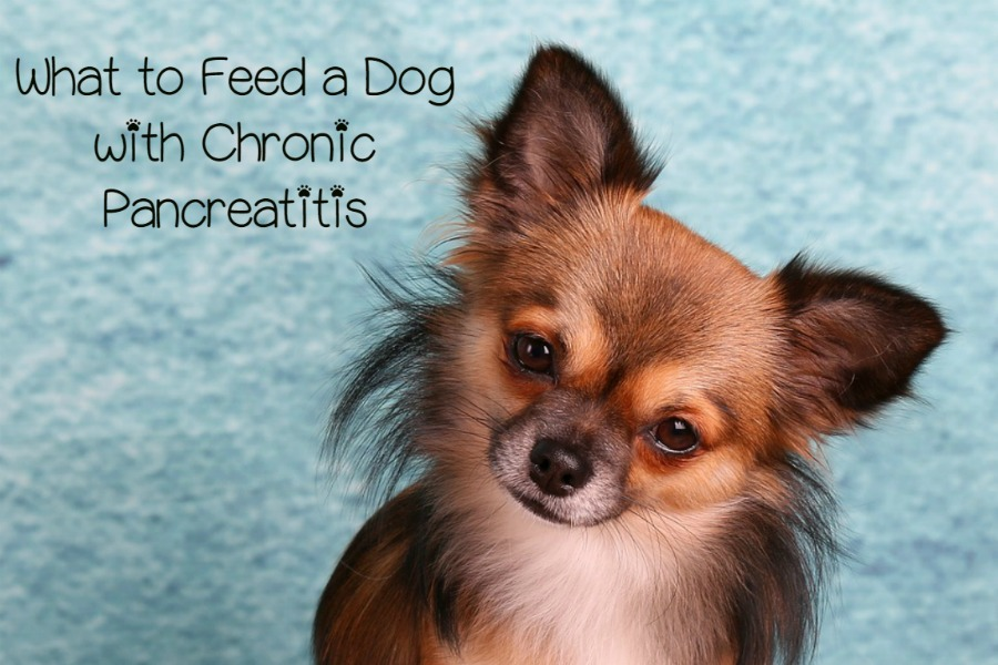 What To Give A Dog With Pancreatitis
