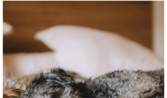 What are the risks of letting your dog sleep in bed with you? Check out both the real and imagined risks!