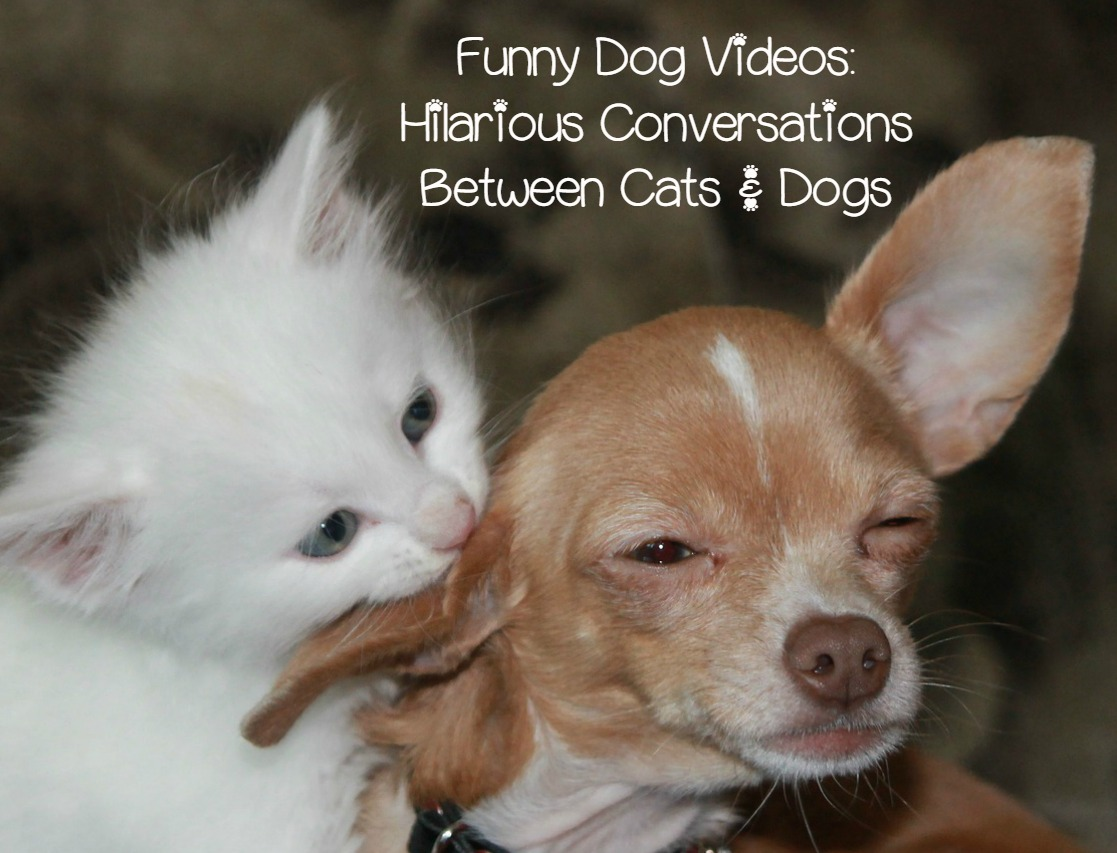 Funny Dog Video Cat Takes on a Beagle Talking Pet Clips