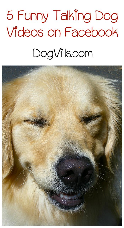 5 Funny Talking Dog Videos on Facebook