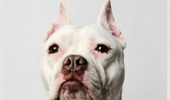 5 Funny Talking Dog Videos Featuring the Lovable Pitbull