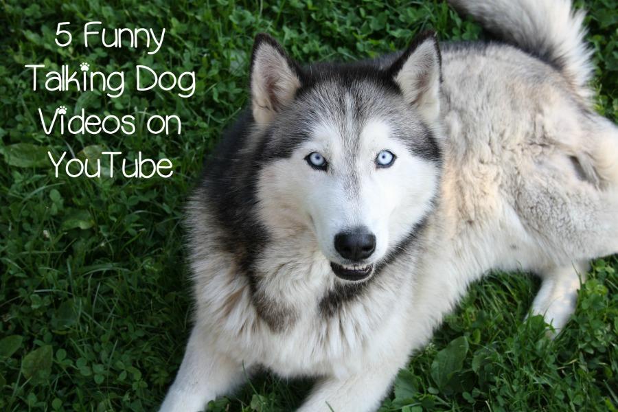 Facebook Dog Talking About Food