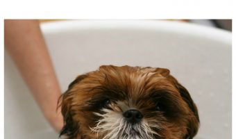 Can you really kill fleas by just drowning them? Find out if this old wives tale actually works, then get dog health tips for the best way to get rid of fleas.