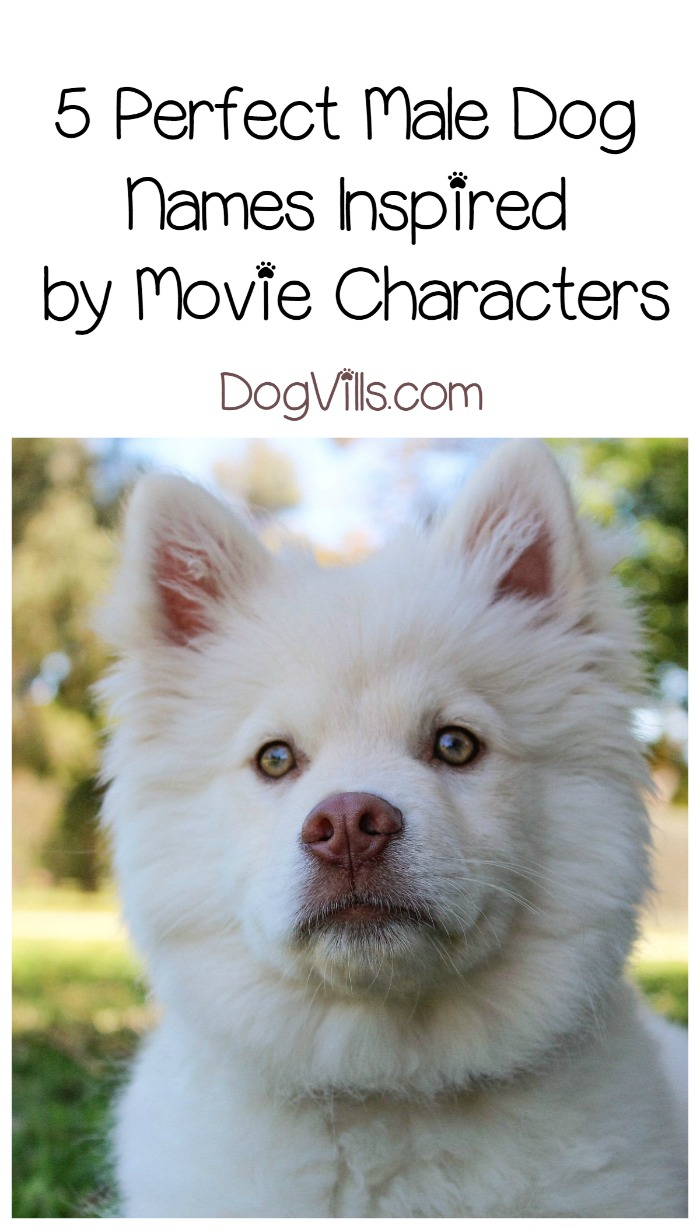 Male Dog Names Inspired by Movie Characters