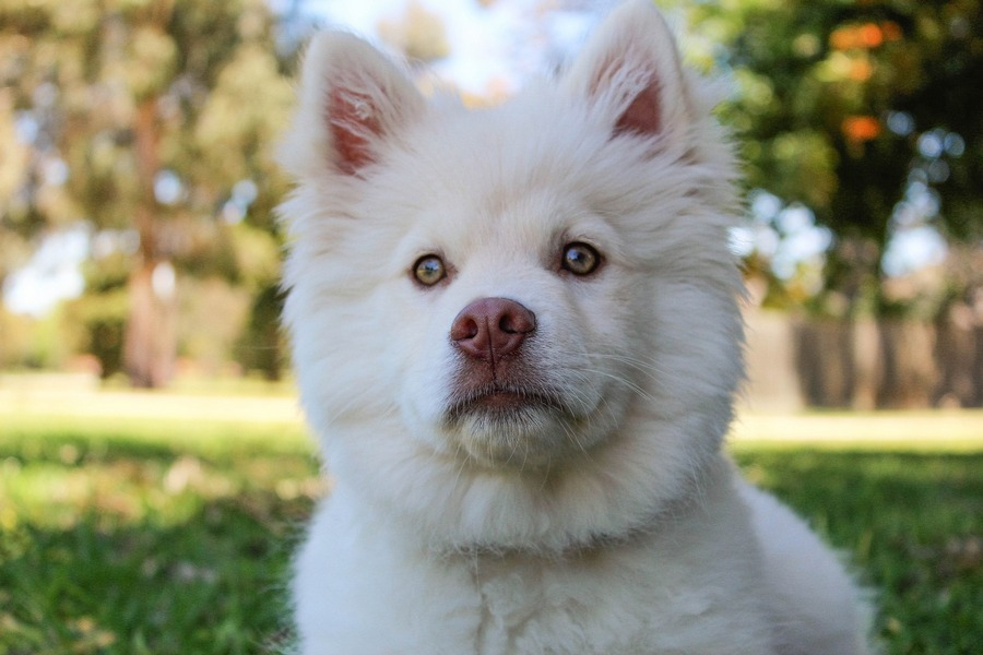 Male Dog Names Inspired by Movie Characters - DogVills