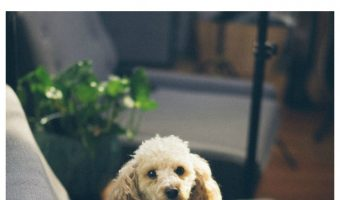 """A reader asked """"my dog keeps stealing my seat, is it a sign of territorial aggression?"""" Check out the answer & get more training tips for dealing with aggression!"""