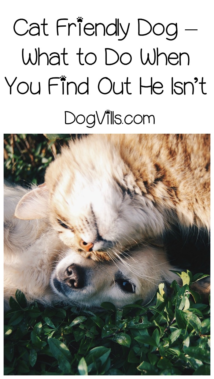 Cat Friendly Dog – What to Do When You Find Out He Isn't