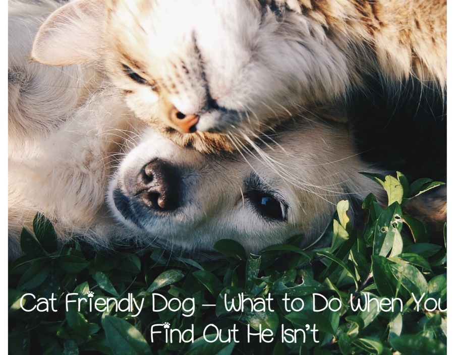 cats and dogs what do you essay I'm a cat person, and here's what i know to be true  room, plopping on my  face, burrowing under the covers with me, making me feel like whatever i was  going through wasn't the worst  personal essay  cute animals.