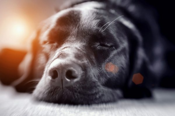 How can I tell if my dog is in pain? It's a common question for pet parents. Check out the signs!