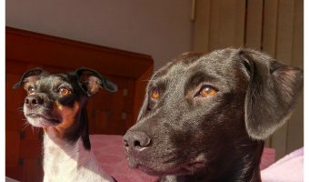 Separation Anxiety in Dogs and What You Can Do About It