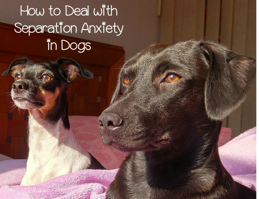 How Do You Deal With Separation Anxiety In Dogs