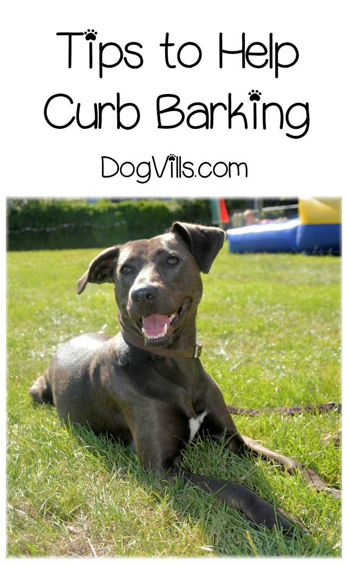 5 Must-Know Dog Training Tips to Curb Barking
