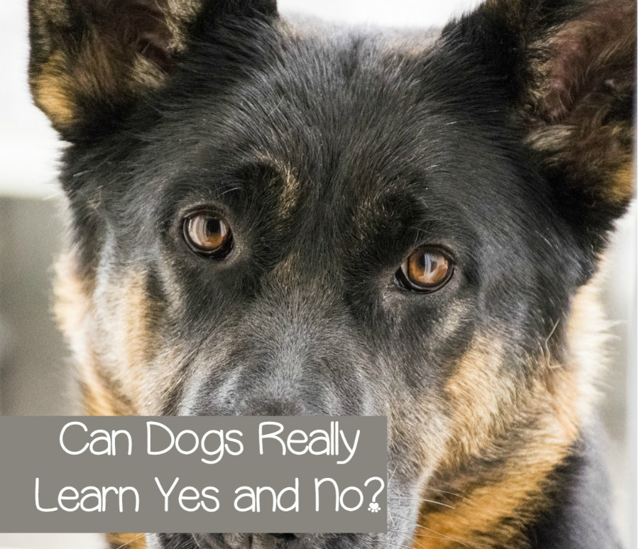 How Many Words Do Dogs Know? - Animal Planet