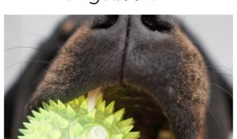 """Wondering """"what should I do when my dog starts losing his teeth?"""" Find out what- if anything- you need to be doing!"""