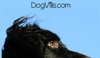 Training Your Dog – How to Get Him to Focus