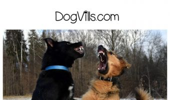 Breaking Up a Dog Fight – What to Do and What NOT to Do