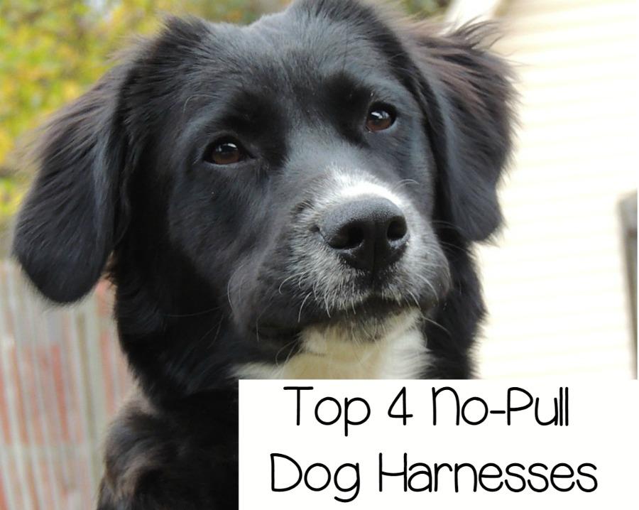 Adjustable Beds Reviews >> Top 4 Adjustable No Pull Dog Harnesses -DogVills
