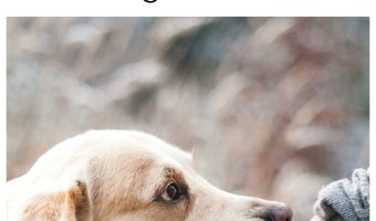 Nurse Fido: Why Dogs Lick Their (and Your) Wounds