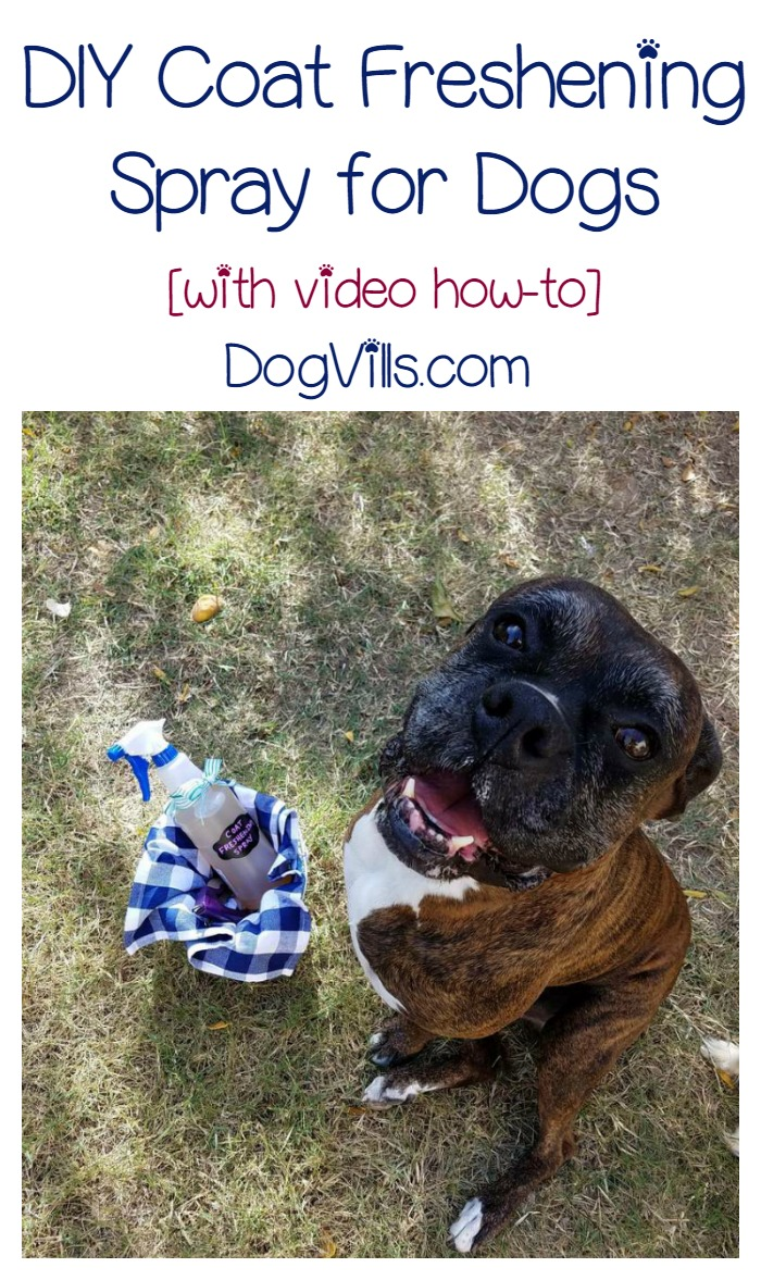 DIY Coat Freshening Spray for Dogs [with video how-to]