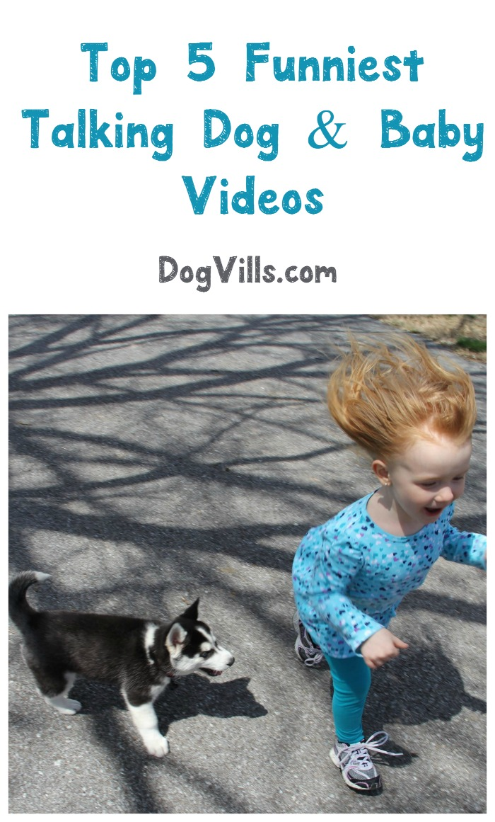 5 Funniest Talking Dog and Baby Videos on YouTube
